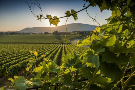 wine country Franciacorta