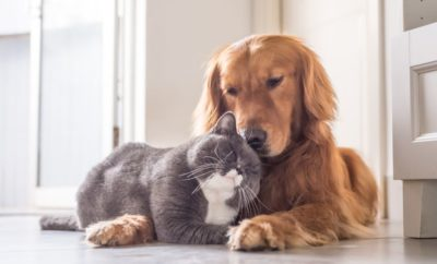 Having a Pet in Italy – What you Need to Know
